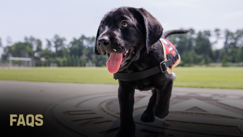 Atlanta United Pup ATLUTD Pup King FAQ