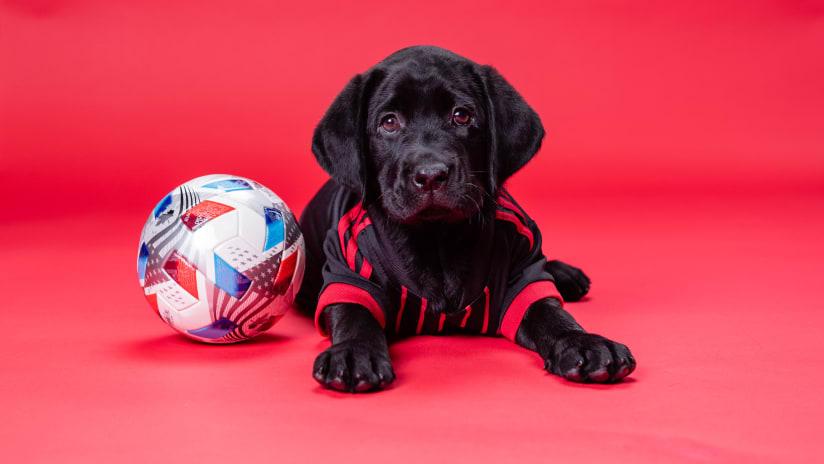 Atlanta United partners with America's VetDogs to raise second future service dog ATLUTD Pup King