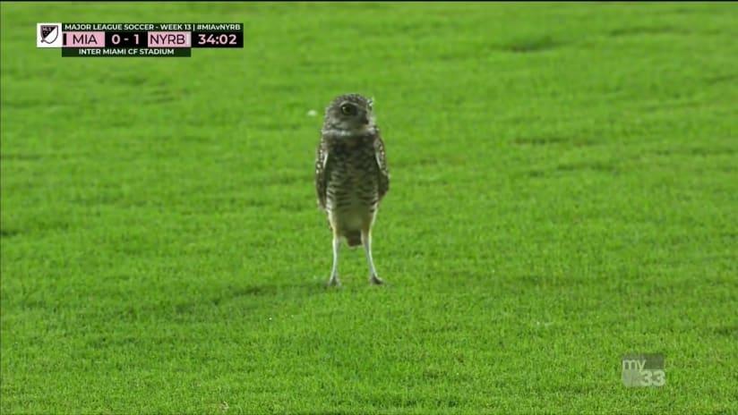 Owl on the field - Inter Miami vs. New York Red Bulls - September 23, 2020