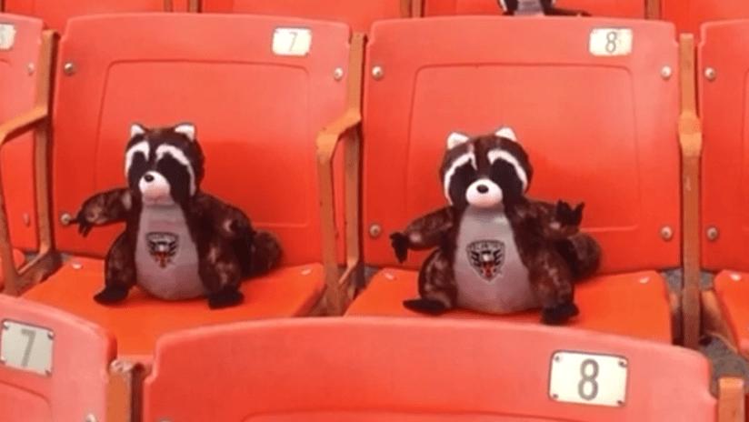 RFK rally raccoons - DC United