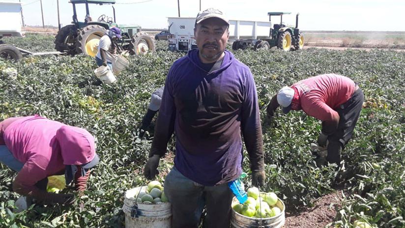 Farmworkers - Julian Araujo feature - November 2020