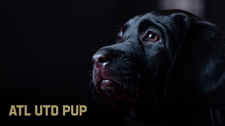 Atlanta United Pup ATLUTD Pup King Community Home