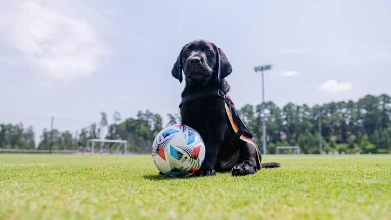 Atlanta United Pup King FAQS